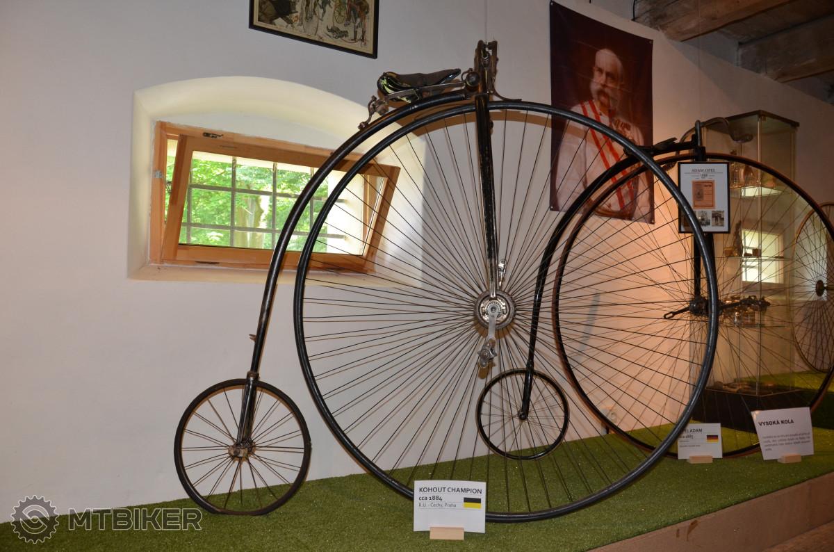 Kohout Champion - cca 1884.