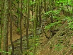 Butkov Kanada
