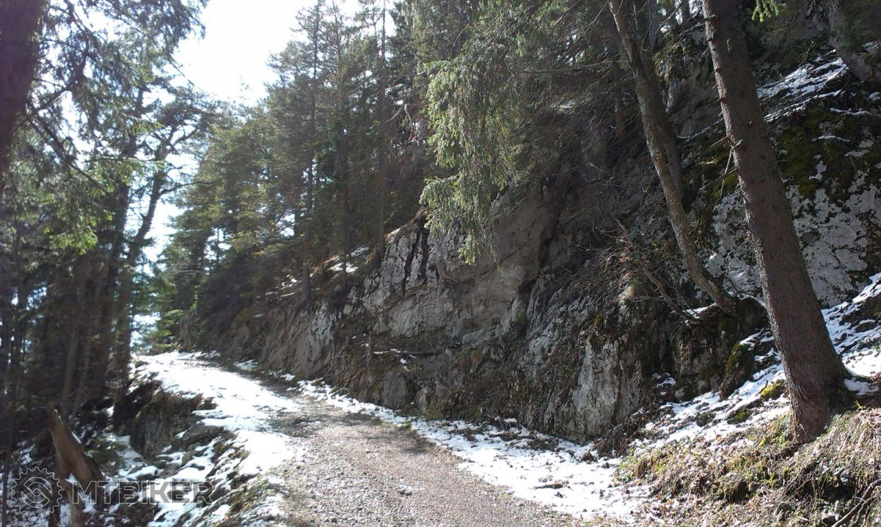Cestou v lese